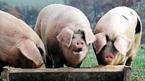 factoring brokers feeding at the trough